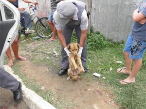 Cachorro ficou com as quatro patas feridas após ser arrastado por carro (Foto: Divulgação/ Polícia Militar)