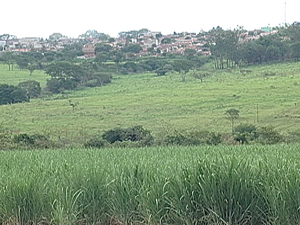 Prefeitura de Uberaba quer reduzir limite da cana (Foto: Reprodução/TV Integração)