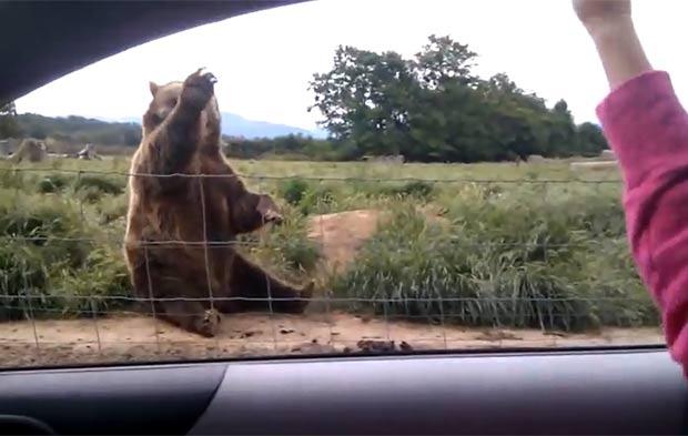 Urso parece estar acenando para uma garota. (Foto: Reprodução/YouTube)