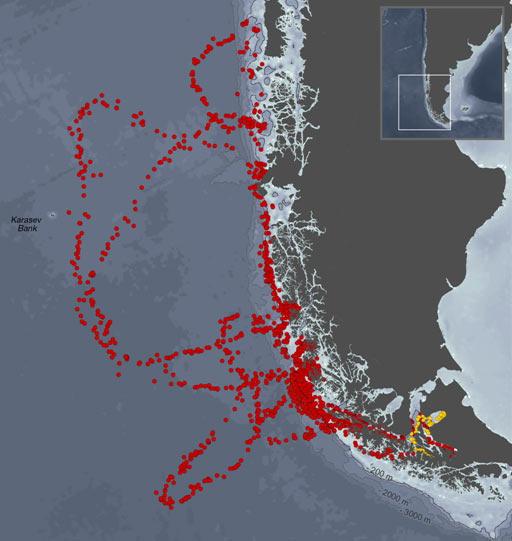 A linha vermelha no mapa mostra o trajeto percorrido pelo elefante-marinho Jackson entre dezembro de 2010 e novembro de 2011. (Foto: Divulgação/Wildlife Conservation Society)