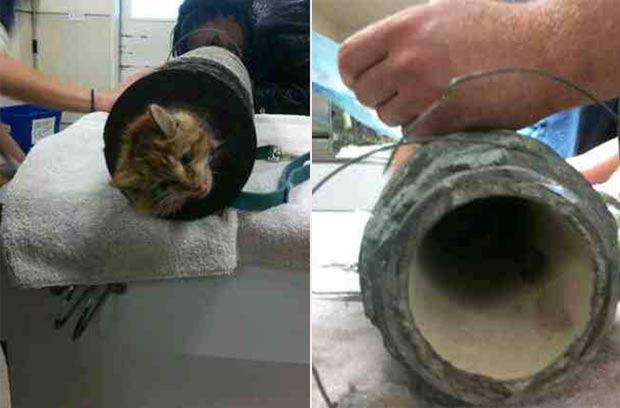 Gatinho foi encontrado entalado dentro de um tubo de esgoto. (Foto: Divulgação)