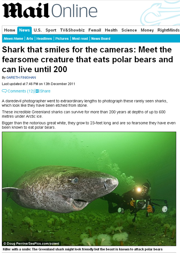 Exemplar do tubarão da Groelândia, fotografado no rio Saint Lawrence, na América do Norte. (Foto: Daily Mail / Reprodução)