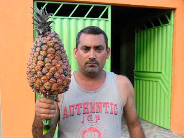 Produtor baiano diz ter colhido 'abacaxi gigante' de 14 quilos  (Foto: Blog do Marcos Frahm)