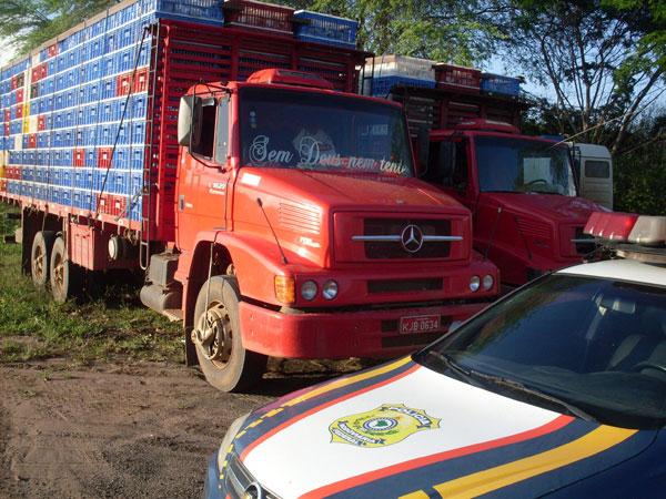 Cinco mil galinhas apreendidas em estrada serão incineradas, diz Adab (Foto: Divulgação/PRF)