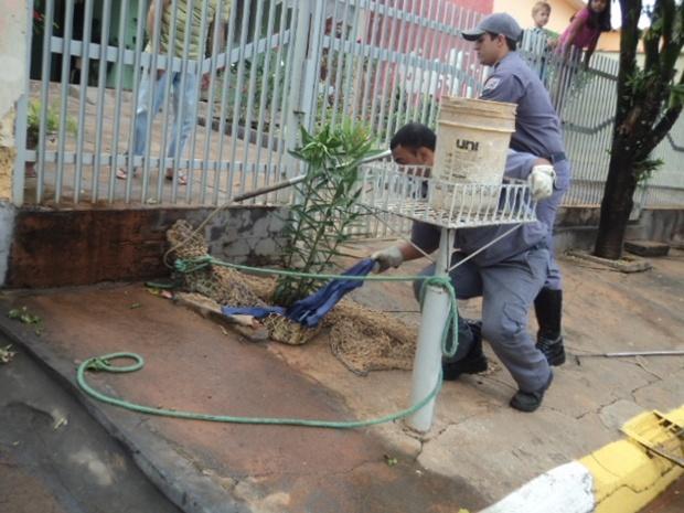 Policiais resgatam jacaré de quase 2 metros em rua de Embaúba, SP (Foto: Reprodução / TV Tem)