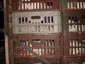 Cinco mil galinhas apreendidas em estrada serão incineradas, diz Adab (Foto: Divulgação/Adab)