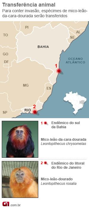 mico-leão (Foto: G1)