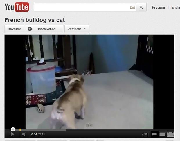 Cão ficou latindo e provocando gato.  (Foto: Reprodução/YouTube)