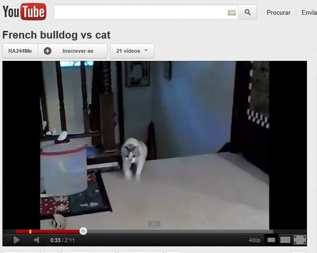 Após gato reagir, 'cão medroso' fugiu em disparada. (Foto: Reprodução)