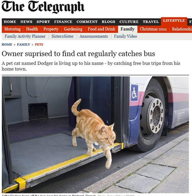 'Artful Dodger' 'pega' regularmente ônibus e passeia pela cidade. (Foto: Reprodução/Daily Telegraph)