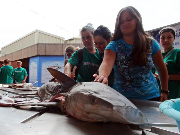 Visitantes podem tocar o tubarão após a dissecação. (Foto: Dennis Barbosa/Globo Natureza)