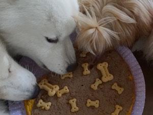 Cachorros devoram bolo especial (Foto: Luna Markman/G1)
