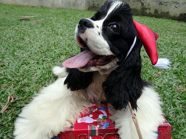 Amigo secreto de cachorro (Foto: Luna Markman/G1)