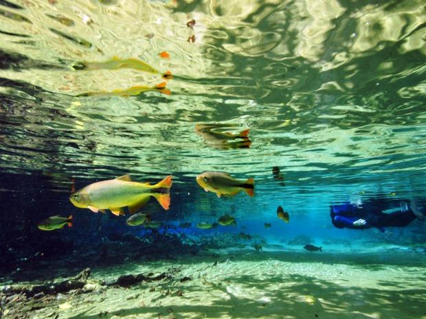 Nascente parece 'piscina natural e visitantes  nadam ao lado de cardumes de peixes (Foto: André Seale/ Divulgação)