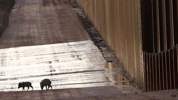 A fotógrafa americana Krista Schlyer capta com sua câmera os efeitos causados pelo muro criado na fronteira entre os Estados Unidos e México à fauna e à flora da região. (Foto: Krista Schlyer)