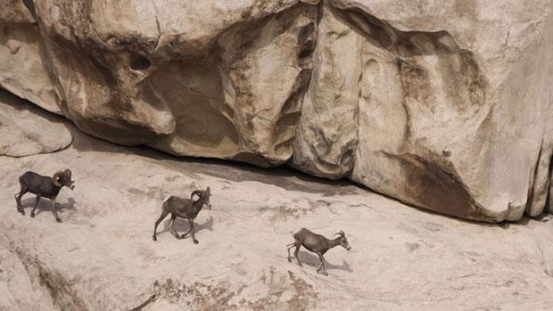 Grupos de defesa do meio ambiente afirmam que o muro afeta muitas espécies, que ficam impedidas de chegar às suas fontes d'água e às suas rotas migratórias naturais. (Foto: Krista Schlyer)