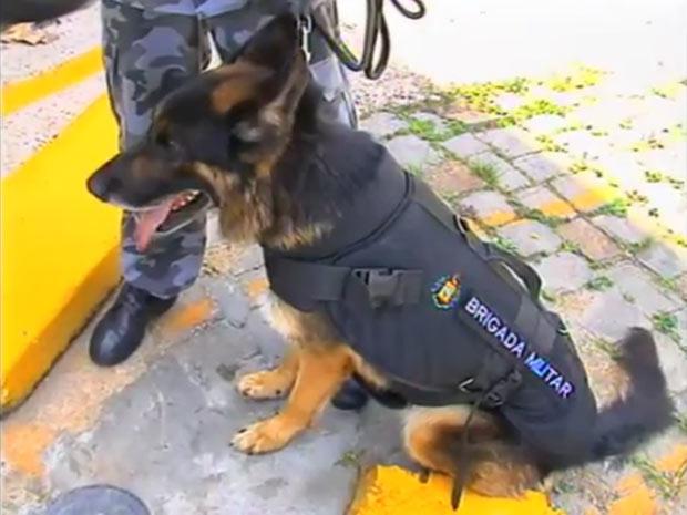 Cães da Brigada Militar de Caxias do Sul agora são protegidos por colete à prova de balas (Foto: Reprodução/RBS TV)