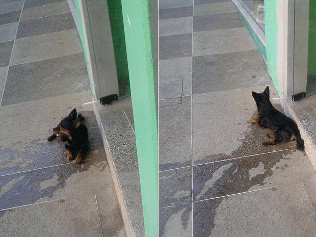 Cão se refresca com pingos de aparelho de ar condicionado em Teutônia, RS (Foto: Fábio Becker, Divulgação)