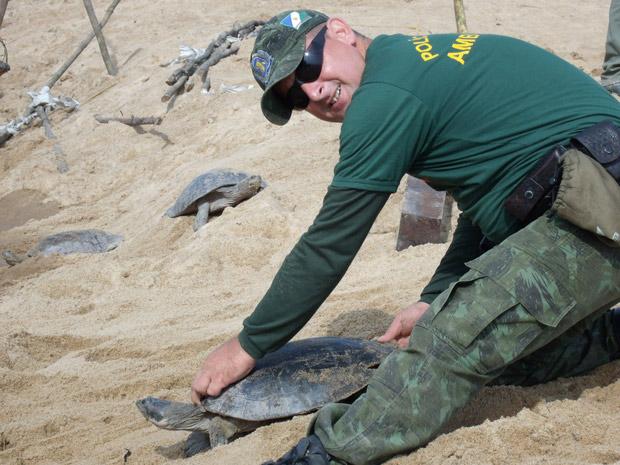 Tartarugas foram capturadas durante o período de reprodução, que acontece entre dezembro e fevereiro (Foto: Divulgação/Samuel Lima Rodrigues/ICMBio)