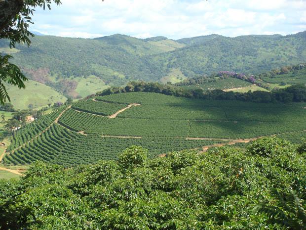 Cultivo do café em fazenda no Sul de Minas encanta pela beleza e é nova aposta do turismo.  (Foto: Paula Senra/Arquivo Pessoal)