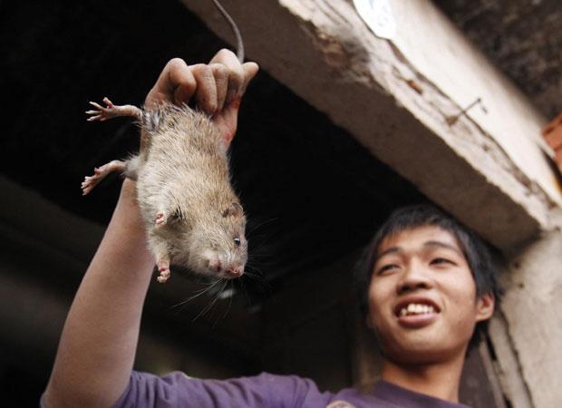 Homem mostra rato a ser abatido para venda em Canh Nau  (Foto: Reuters)