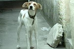 Cão atacado a facadas no RS (Foto: Reprodução / RBS TV)