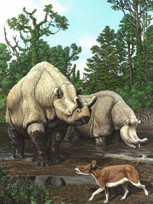 Os parentes do rinoceronte retratados na imagem são os brontotérios, que viveram entre 56 milhões e 34 milhões de anos (Foto: Carl Buell/Cortesia)
