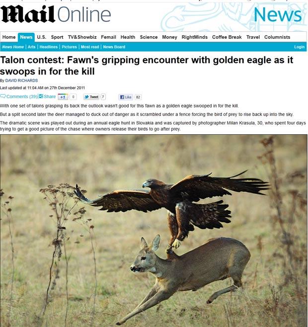 Fotógrafo Milan Krasula registrou o exato momento em que uma águia tentava capturar um cervo. (Foto: Reprodução/Daily Mail)