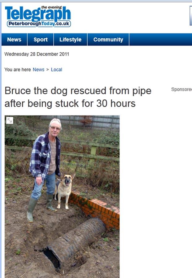 'Bruce' ficou preso no tubo depois de perseguir um coelho. (Foto: Reprodução)