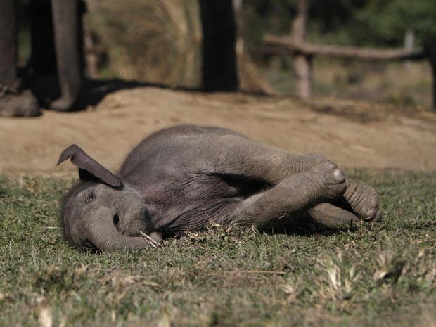 Elefante1 (Foto: Niranjan Shrestha/AP)