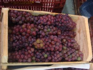 Devem ser comidas 12 uvas, uma para cada mês do ano (Foto: Fernando Castro/G1)