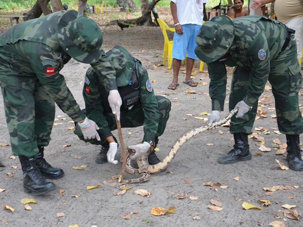 Polícia Ambiental captura cobra em João Pessoa (Foto: Walter Paparazzo/G1)