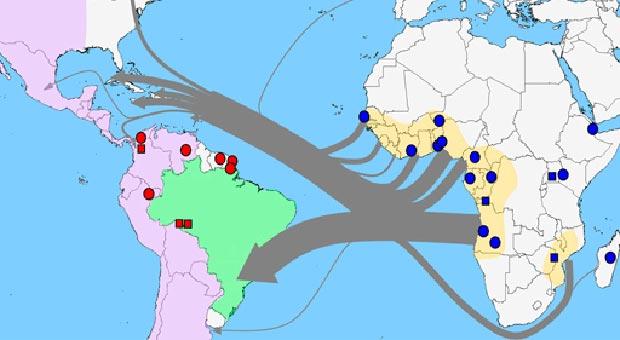 Gráfico mostra como teria sido a propagação da doença (Foto: BBC)