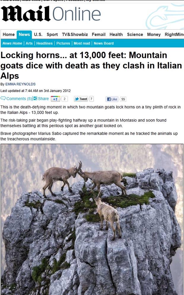 Bodes 'lutam' em cima de uma montanha a quase 4 mil metros nos Alpes italianos. (Foto: Reprodução/Daily Mail)