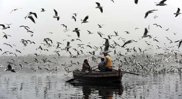 Canoa parece ter sido 'engolida' por bando de aves no rio Yamuna. (Foto: Prakash Singh/AFP)
