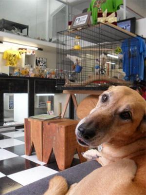 Cachorro para adoção em loja recém-aberta no Centro de São Paulo (Foto: Divulgação)