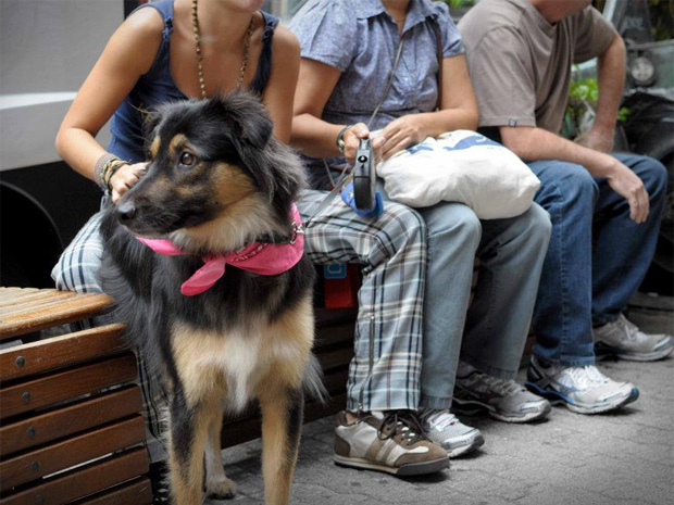 Dona aguarda com cadela no centro de adoção de animais abandonados, em SP (Foto: Divulgação)