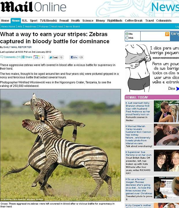 Zebras (Foto: Daily Mail/Reprodução)