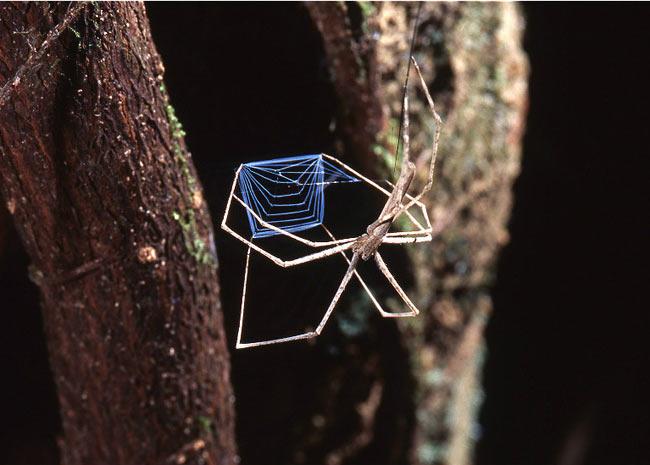 """As aranhas apareceram na Terra há mais de 500 milhões de anos. """"As pessoas conhecem muito pouco, mas se sentem atraídas por tudo o que é relacionado com as aranhas"""", diz o especialista Frédérik Canard, curador da mostra. (Foto: Patrick Maréchal/BBC)"""
