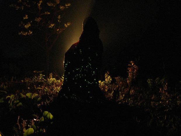 Larvas fazem cupinzeiros brilharem durante a noite (Foto: Simone Mamede/Arquivo Pessoal)
