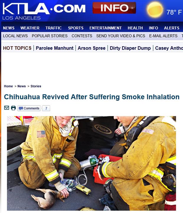 Chihuahua recebeu socorro de bombeiros e foi ressuscitado (Foto: Reprodução/KTLA)