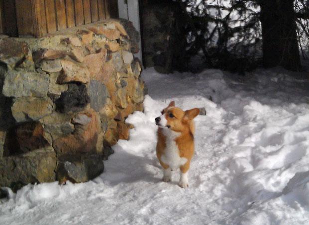 Ole é visto no motel de Montana quatro dias após avalanche que matou seu dono, em imagem de quarta-feira (4) (Foto: AP/Natasha Baydakova)