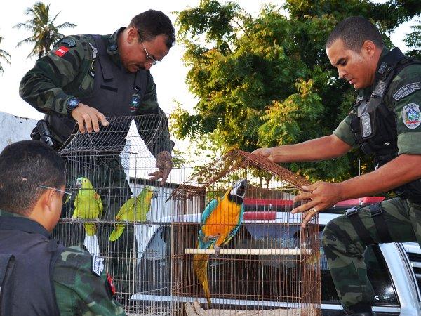 Arara e papagaios são apreendidos na Paraíba (Foto: Walter Paparazzo/G1 PB)