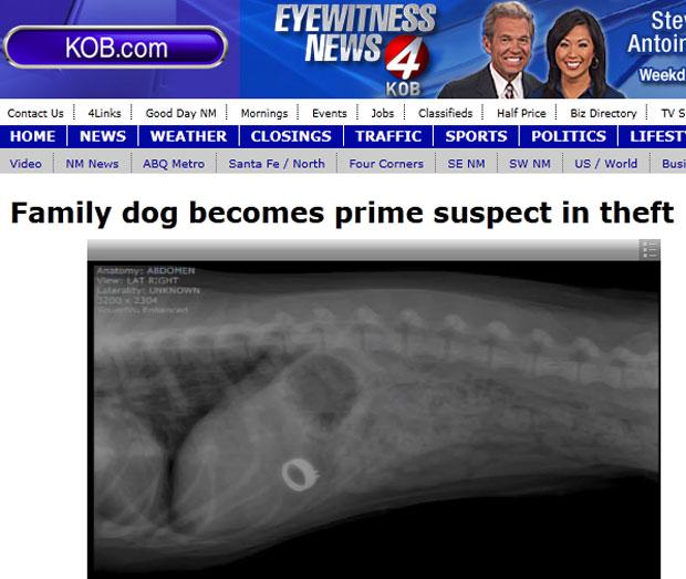 Exame de raio-X mostrou o anel no estômago da cadela (Foto: Reprodução/KOB)
