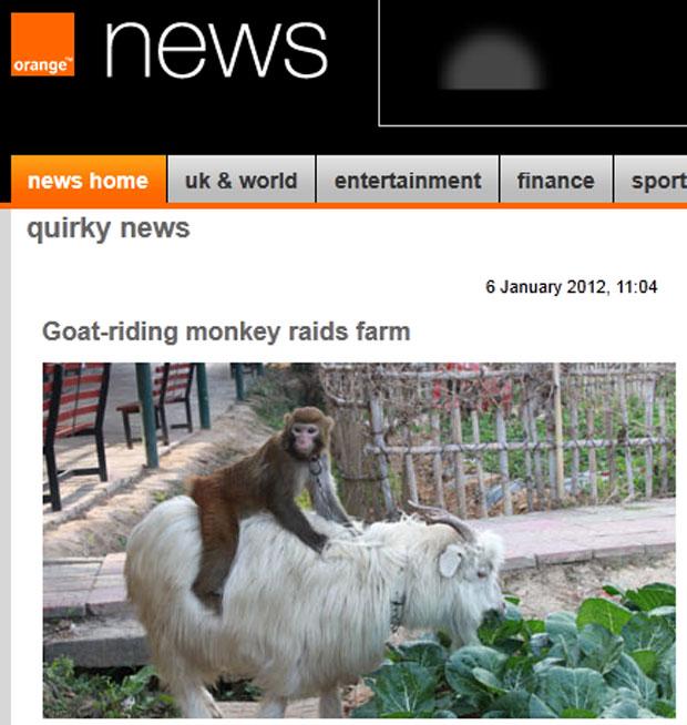 Macaco foi flagrado sobre cabra durante a 'ação criminosa' (Foto: Reprodução/Orange News)