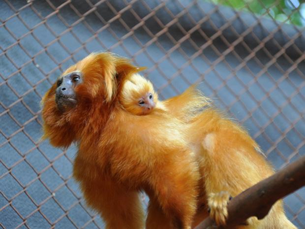 Filhotes nasceram no dia 22 de dezembro em parque ecológico (Foto: Susy Coutinho/Prefeitura de Americana)