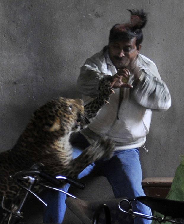 Três pessoas ficaram feridas após ser atacadas pelo animal. (Foto: AFP)