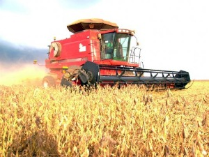 A medida em que soja é colhida o milho é plantado (Foto: Aprosoja-MT)