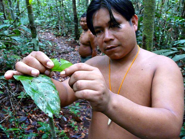 Trilha também possibilita o conhecimento de diferentes plantas medicinais (Foto: Carlos Eduardo Matos/G1 AM)
