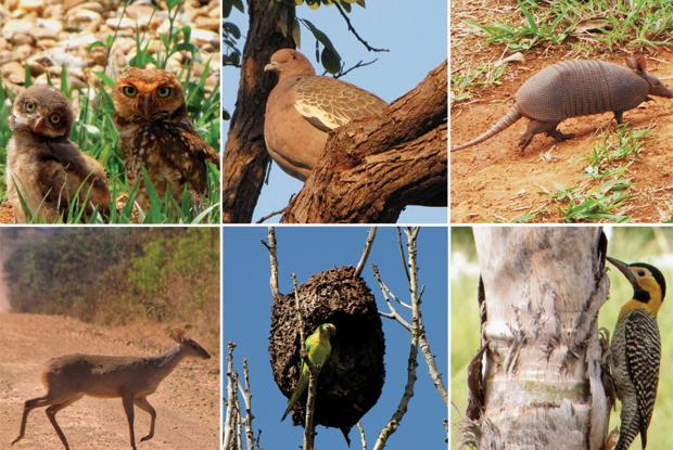 Excepcional G1 - DF tem 26 tipos de vertebrados em lista nacional de animais  TF43